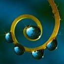 spiral fern water